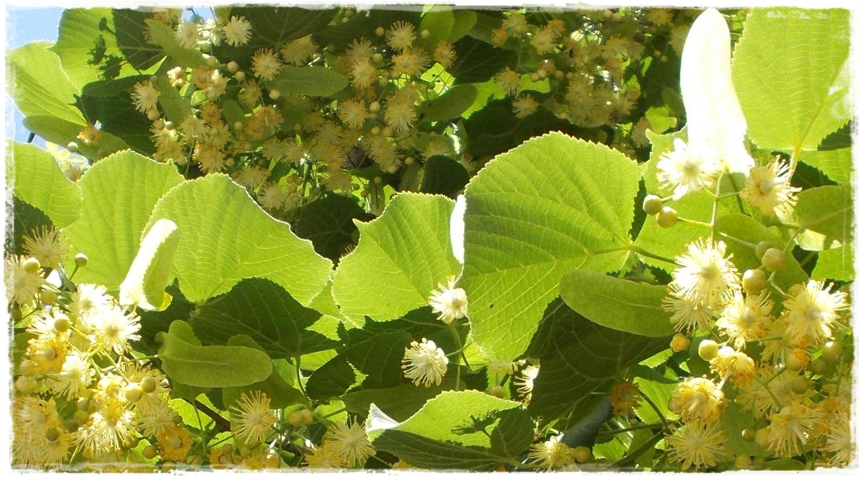 Обои цветок жизни эрмитаже